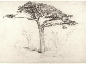 Old Cedar Tree in Botanic Garden, Chelsea, 1854 (Pencil on Paper) by Samuel Palmer