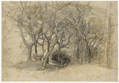 Study of Trees, Clovelly Park, 1834 by Samuel Palmer