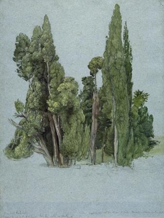 The Cypresses at the Villa D'Este, Tivoli (W/C and Gouache with Graphite on Paper) by Samuel Palmer