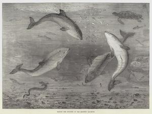 Feeding the Porpoises at the Brighton Aquarium by Samuel Read