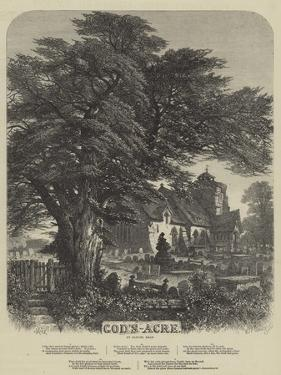 God's Acre by Samuel Read