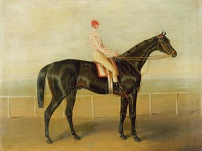 Voltigeur, with Job Marson Up by Samuel Spode