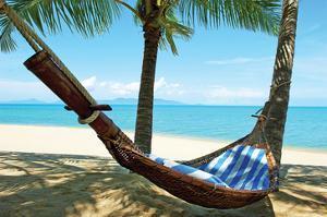 Sand Beach Hammock Palm Trees