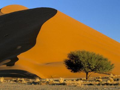 https://imgc.allpostersimages.com/img/posters/sand-dune-sossusvlei-dune-field-namib-naukluft-park-namib-desert-namibia-africa_u-L-P1U0BM0.jpg?p=0