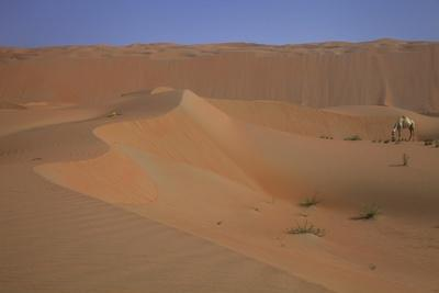 https://imgc.allpostersimages.com/img/posters/sand-dunes-in-the-desert-with-camel_u-L-Q1CAX1E0.jpg?artPerspective=n