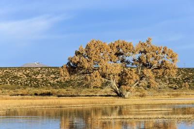 https://imgc.allpostersimages.com/img/posters/sandhill-crane-pond-bosque-del-apache-national-wildlife-refuge-new-mexico_u-L-Q12T54N0.jpg?artPerspective=n