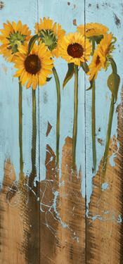 Sunflowers on Wood II by Sandra Iafrate
