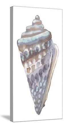 Coastal Seashells - Cone by Sandra Jacobs