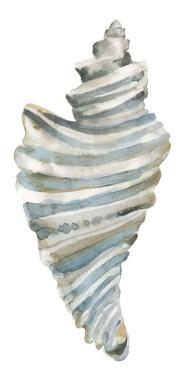 Coastal Seashells - Drill by Sandra Jacobs