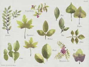New Leaves II by Sandra Jacobs