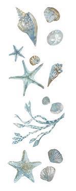 Ocean Treasures - Shells by Sandra Jacobs