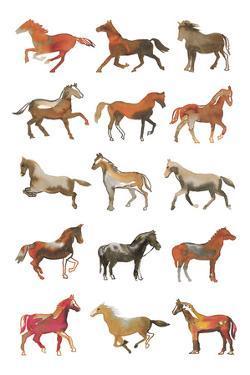 Pony Club by Sandra Jacobs