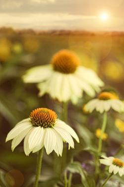 Summer Flowers in Field by Sandralise