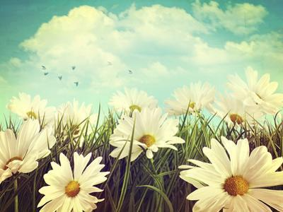 Vintage Look of Summer Daisies in Grass by Sandralise