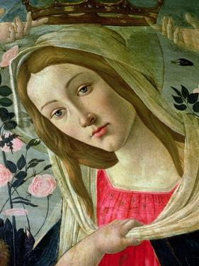 Madonna and Child Crowned by Angels, Detail of the Madonna by Sandro Botticelli