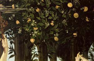 Primavera, Detail of the Orange Tree, c.1478 by Sandro Botticelli