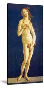 Venus by Sandro Botticelli