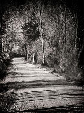 Country Lane by Sandro De Carvalho