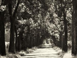 Country Road 2 by Sandro De Carvalho