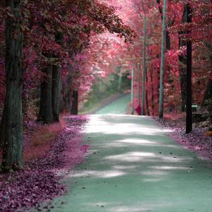 Forest Blush by Sandro De Carvalho