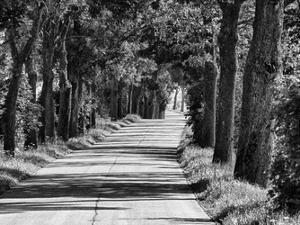 Sunday Drive 1 by Sandro De Carvalho