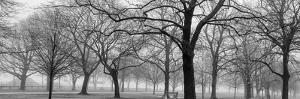 The Winter Park by Sandro De Carvalho