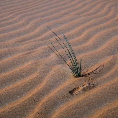 https://imgc.allpostersimages.com/img/posters/sands-with-green-grass-sprout-square_u-L-Q1CAKNQ0.jpg?artPerspective=n