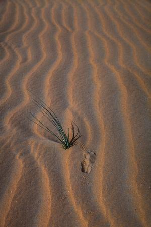 https://imgc.allpostersimages.com/img/posters/sands-with-green-grass-verticle_u-L-Q1CA6ZL0.jpg?artPerspective=n