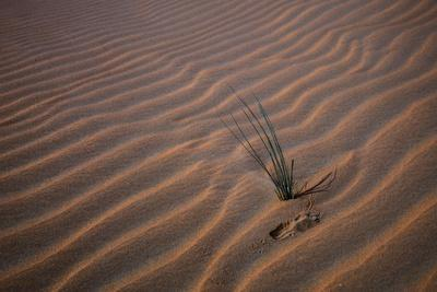 https://imgc.allpostersimages.com/img/posters/sands-with-waves-and-grass_u-L-Q1CA5E70.jpg?artPerspective=n