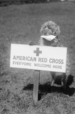 Sandy, the American Red Cross Dog Welcomes Everyone