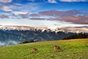 Puos Deer by Sankar Raman
