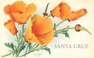 Santa Cruz, California Poppies, California