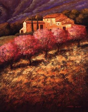 Cherry Blossoms by Santo Devita