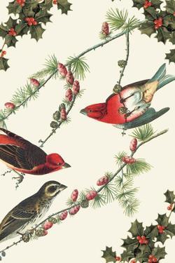 Christmas Birds and Holly by Sara Pierce