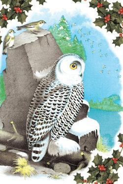 Christmas Snow Owl by Sara Pierce