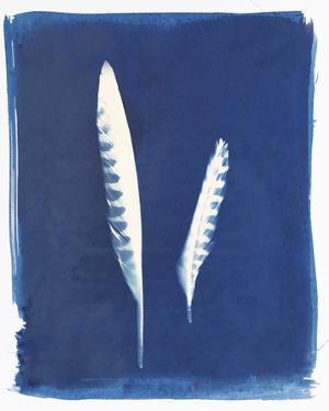 Kestrel Feathers by Sarah Cheyne