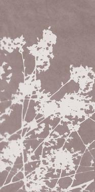 Ramble in Grey by Sarah Cheyne