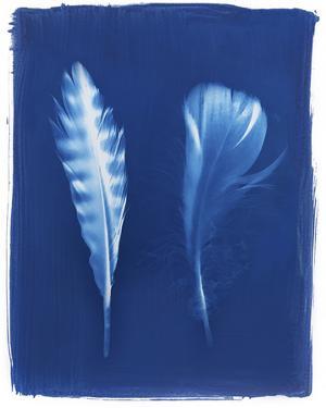 Sparrowhawk Feathers by Sarah Cheyne