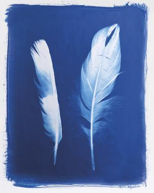 Swan and Magpie Feathers by Sarah Cheyne