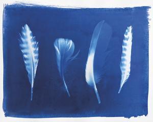 Woodland Bird's Feathers by Sarah Cheyne