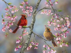 Spring Cardinals by Sarah Davis