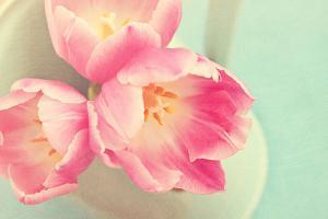 Resplendent Blossoms by Sarah Gardner