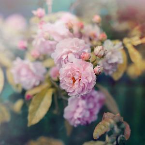 Season of Blossoms by Sarah Gardner