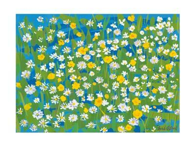 Buttercups and Daisies, 2009