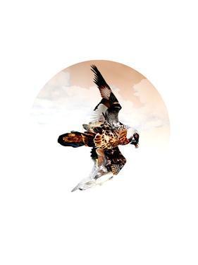 Bird of Prey Flying by Sarah Jackson
