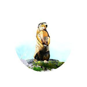 Brown Beaver on Rock by Sarah Jackson