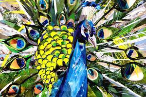 Portrait of Colorful Peacock by Sarah Jackson