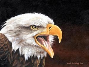 Bald Eagle by Sarah Stribbling