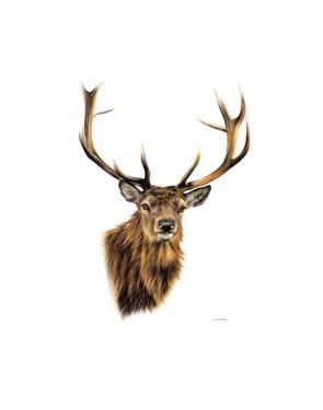 Stag White Background by Sarah Stribbling