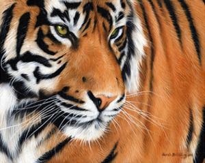 Tiger Crop by Sarah Stribbling